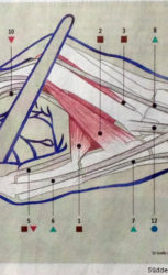 SZ_Handschrift_red